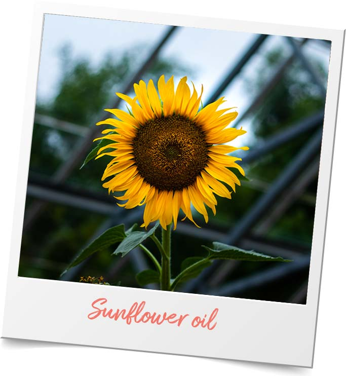 organic sunflower oil france